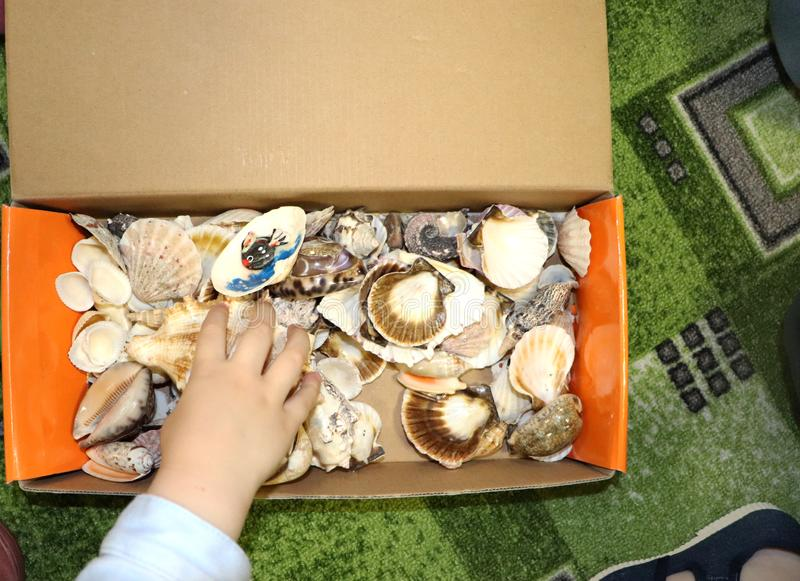 Thematic occupation in the kindergarten on the theme of the sea. Sea shells and shellfish in a close-up box. Sea shells and shellfish in a close-up box. Thematic stock photo