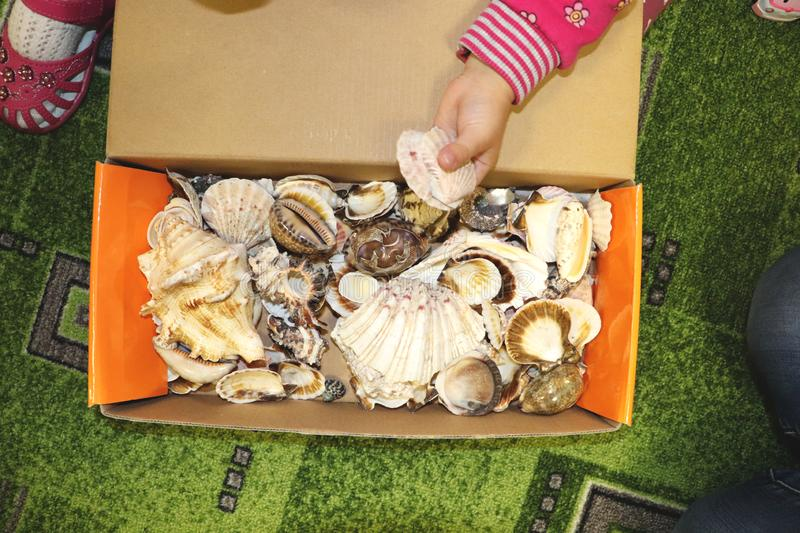Thematic occupation in the kindergarten on the theme of the sea. Sea shells and shellfish in a close-up box. Sea shells and shellfish in a close-up box. Thematic stock images
