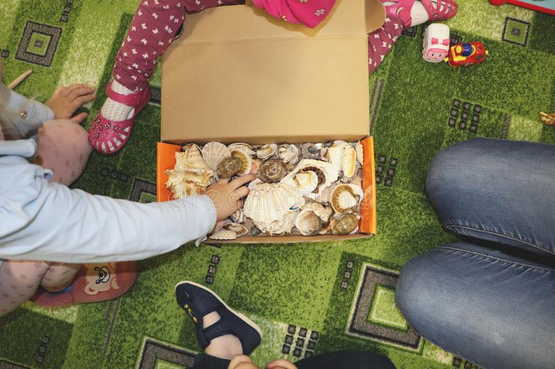 Thematic occupation in the kindergarten on the theme of the sea. Sea shells and shellfish in a close-up box. Sea shells and shellfish in a close-up box. Thematic royalty free stock images