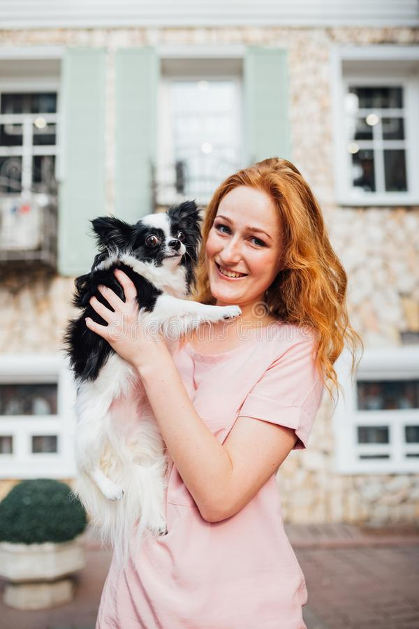 The theme is the friendship of man and animal. Beautiful young red hair Caucasian woman holding a pet dog Chihuahua breed near a stock images