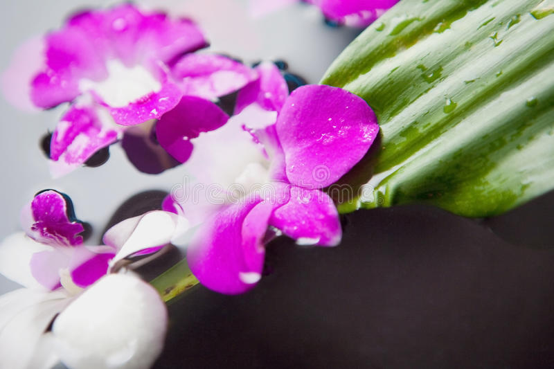 Therapy with orchids and hot stones stock photography