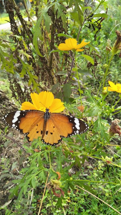 Nature& x27;s beauty, butterfly royalty free stock photos