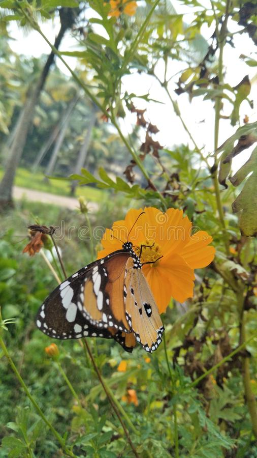 Nature& x27;s beauty, butterfly royalty free stock images