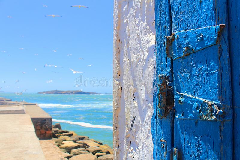 Blue door and seagull from magador in morocco stock image