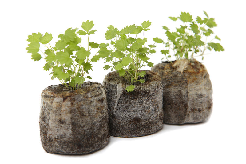 Download There Ecological Baby Plants Stock Image - Image: 24237989