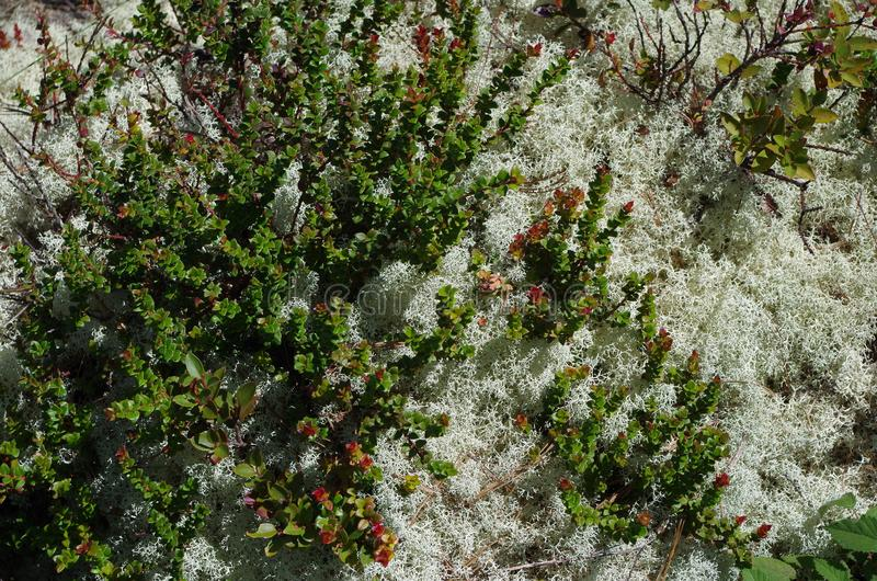 Summer foliage on the mountain. There is a great variety of vegetation in the high mountains of Oaxaca. Each season of the year shows us a different one. In stock images