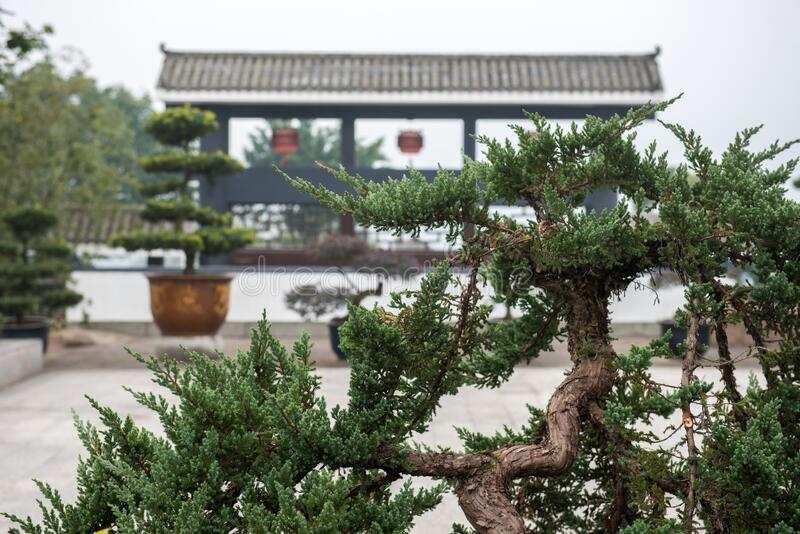 Garden with pile-head bonsai stock photo