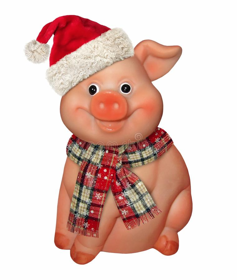 Merry pig in a hat and a scarf. There is a merry pig in a red hat and a scarf. White background. New Year 2019 royalty free stock photography