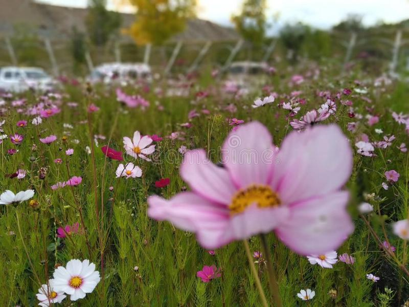 Beautiful wildflowers on the grassland stock photography