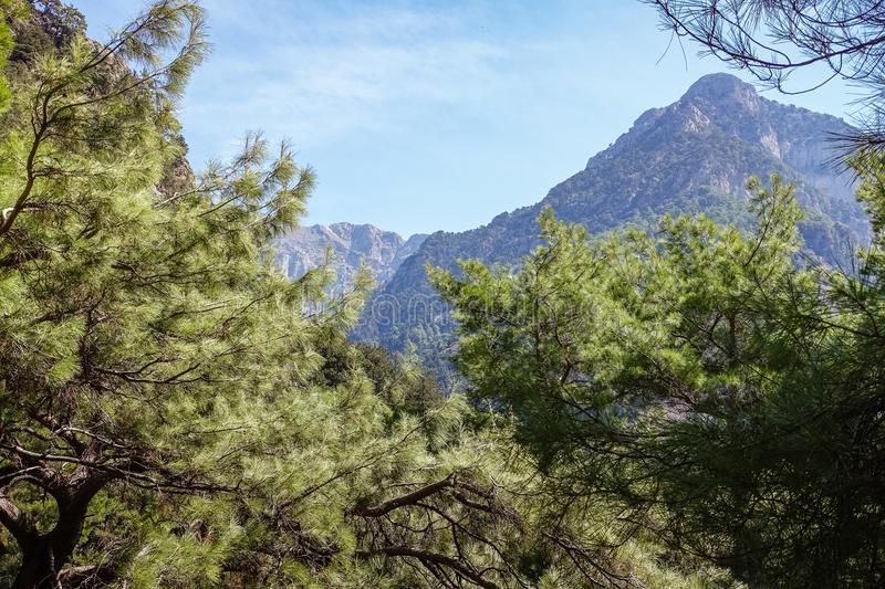 There are mountains and blue skies visible on tree peaks. Sunny day in the mountains, pine branches visible in the vicinity; There are mountains and blue skies royalty free stock image