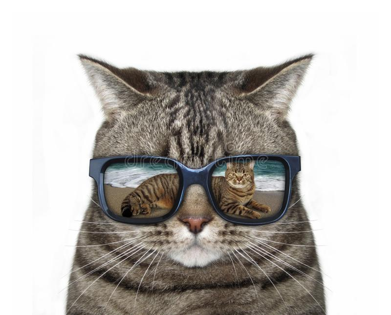 Cat with glasses 3 stock photos
