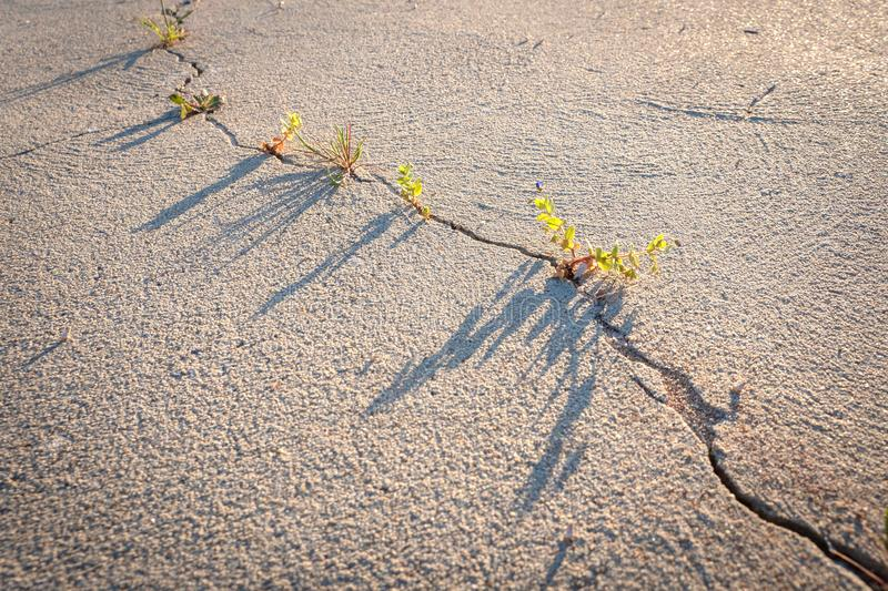 There`s a crack in everything, weeds growing, hope. Crack in dry sand surface forming a line like a graph, weeds, beautiful light royalty free stock image