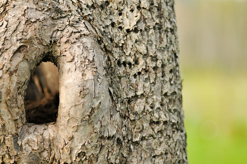 Download There's A Hole In That Tree Stock Photo - Image: 24395780