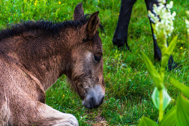 What a beautiful horse :d. There`s something about this horse i just adore !! :d royalty free stock images