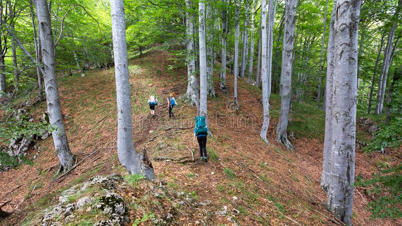 Friends hiking through the wilderness of Buila Vanturarita National Park in Romania royalty free stock photography