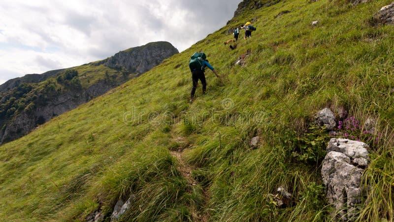 Friends hiking through the wilderness of Buila Vanturarita National Park in Romania royalty free stock photos