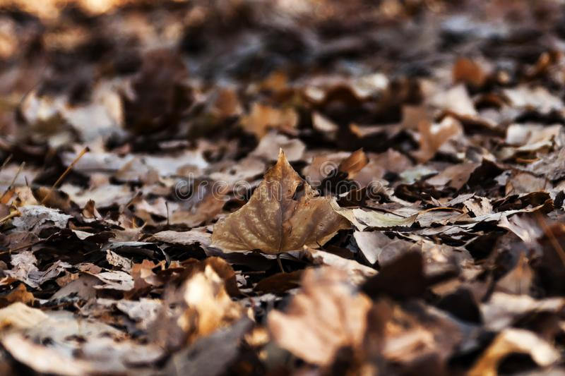 Special among the crowd. Still life in autumn. royalty free stock image
