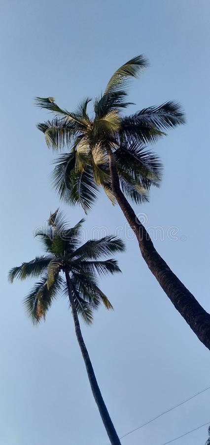 There are two coconut trees, blue clear sky, cool foliage, clean environment, how nice royalty free stock photos