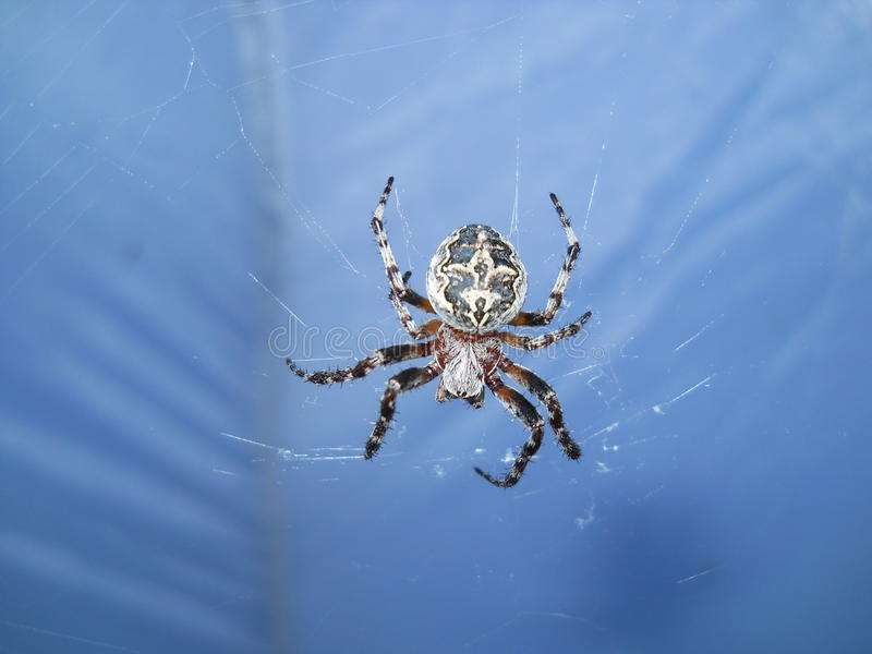 THERES A SPIDER ON THE SMALL SEA OF LAKE BAIKAL royalty free stock photography