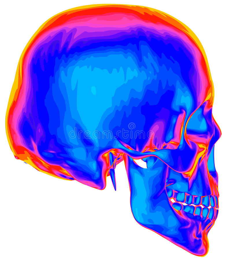 Thermal image of the human skull. Isolated on white background royalty free illustration