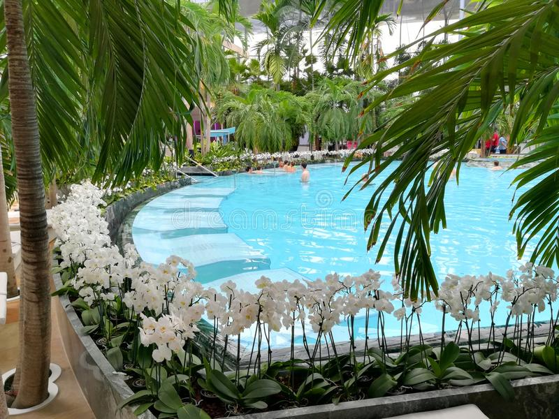 Thermal pool - white orchids on the edge royalty free stock photography