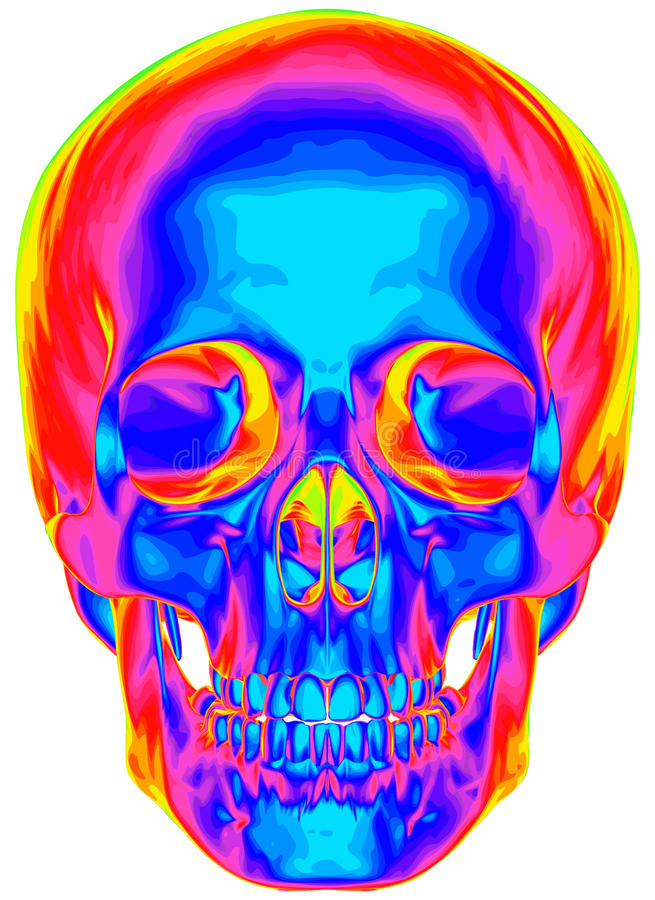 Thermisch beeld van de menselijke schedel stock illustratie