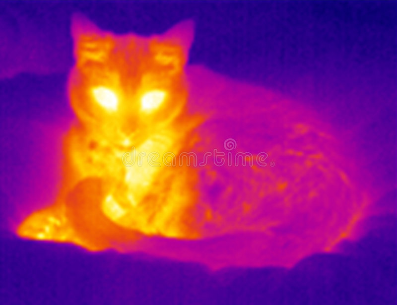 Download Thermograph- Relaxing Cat Royalty Free Stock Photography - Image: 8000207