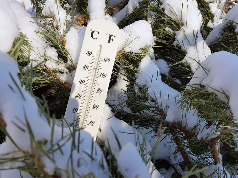 Thermomètre de rue avec une température de Celsius et de Fahrenheit dans la neige à côté d'un jeune pin photo libre de droits