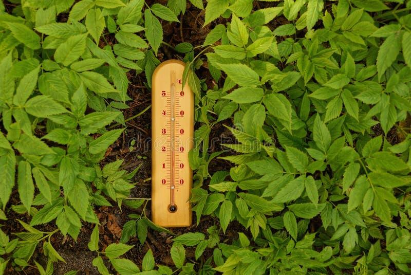 Thermomètre en bois parmi la végétation verte image libre de droits
