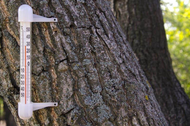 Thermomètre sur un arbre Été chaud photos libres de droits
