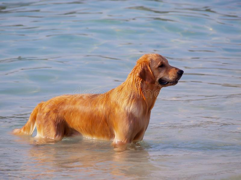 Thhund glücklich, im Meer zu spielen stockfotografie