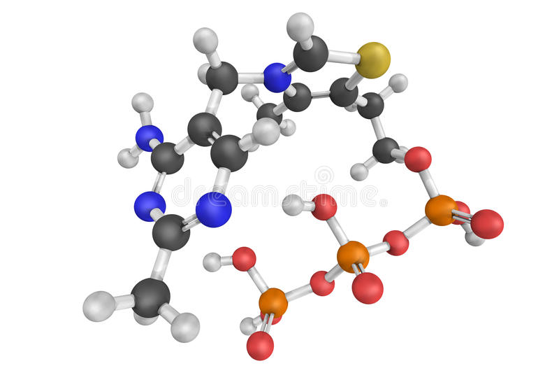 Thiaminetrifosfaat, een biomolecule die in meeste organisms inc wordt gevonden royalty-vrije stock foto