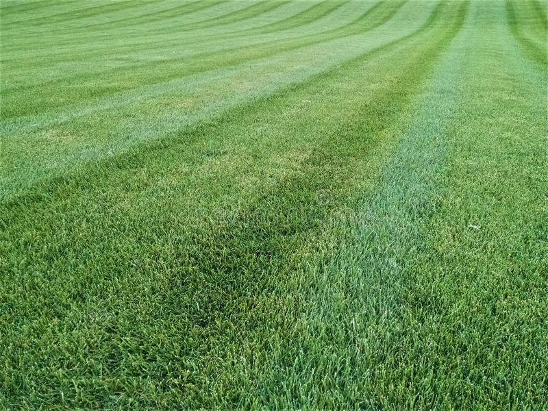 Thick carpet of emerald green grass mown in lines. Linear tire marks show where the mower cut the tall grass. Parallel into distance where a small hill curves royalty free stock images