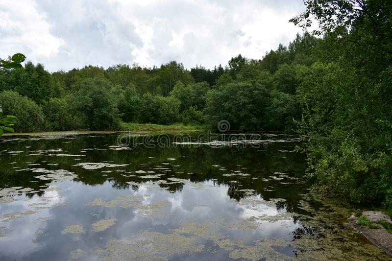 Thick clouds over the forest pond lake reflected in the water, low bowed tree branches. The water surface strewn with small vegetation stock image