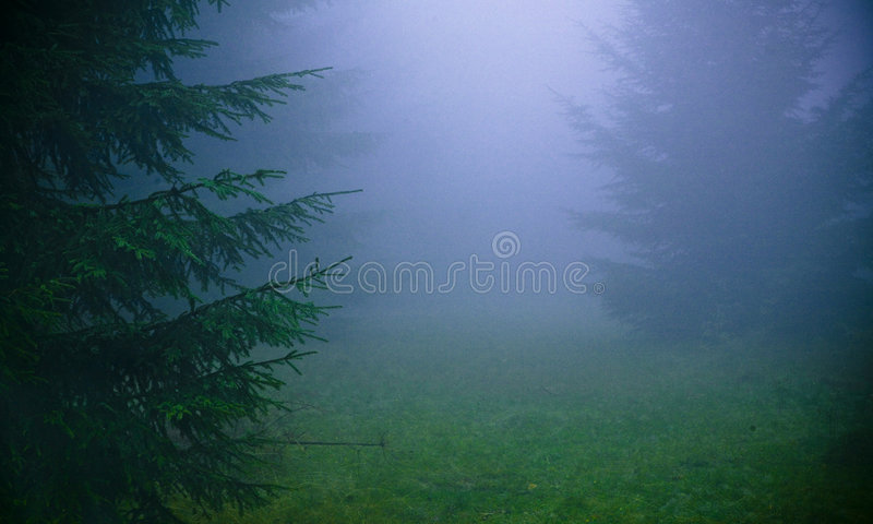 Download Thick fog stock image. Image of dense, lost, shady, beech - 3226707