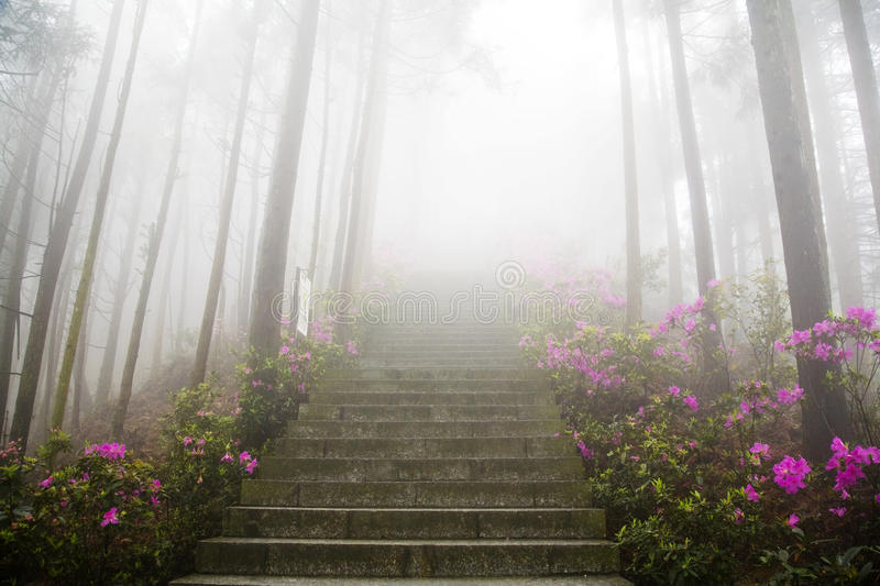 In thick fog. Stairs decorated with flowers in thick fog stock photo