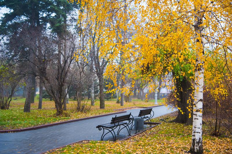 Thick fog and colorful trees in the city park of autumn stock photos