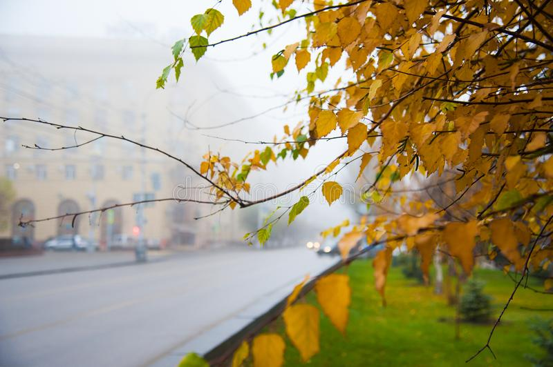 Thick fog and colorful trees in the city park of autumn royalty free stock images