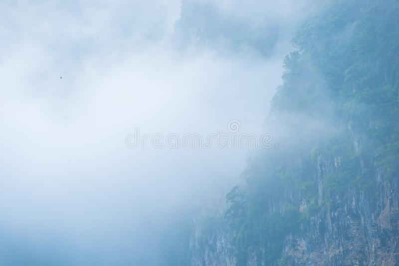 Thick fog covers mountain forests royalty free stock image