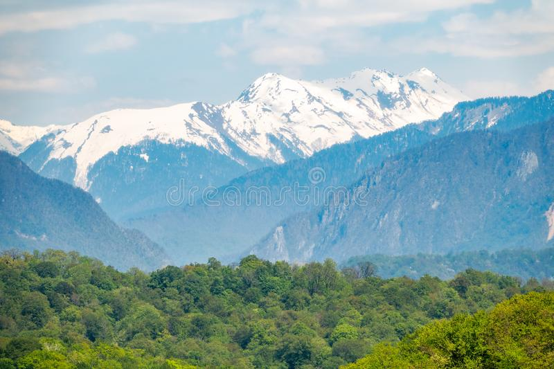 Thick forest in a green valley. Snow capped mountains visible on the horizon. Spring colors stock photos