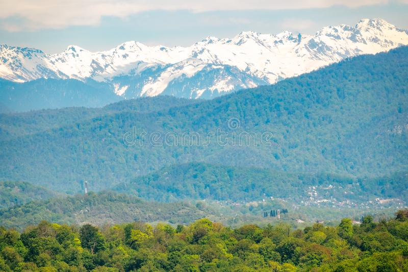 Thick forest in a green valley. Snow capped mountains visible on the horizon. Spring colors royalty free stock image