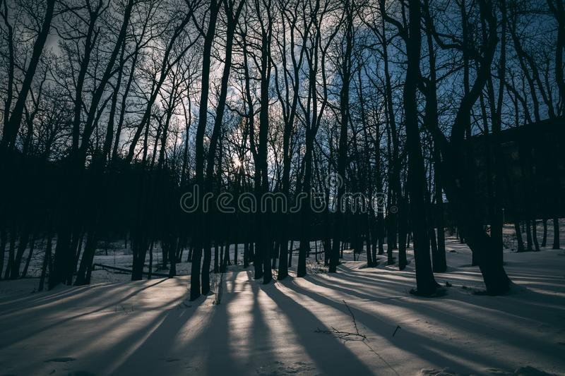 Thick forest stock images