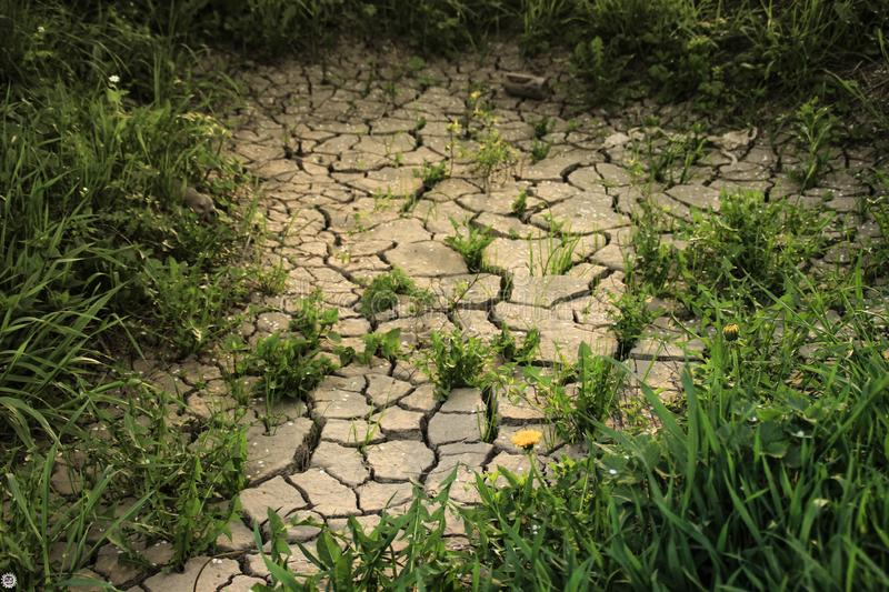 Thick green grass grows among dry cracked earth royalty free stock image