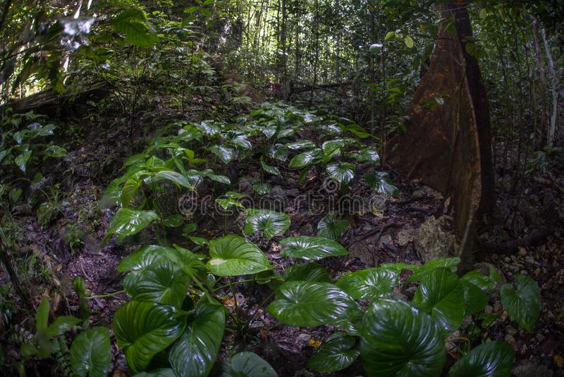 Healthy Rainforest in Raja Ampat, Indonesia stock photos