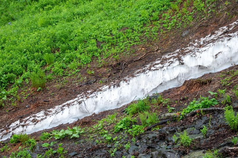 A thick layer of snow melting in high mountains. A thick layer of snow melting in the summer in high mountains. Green vegetation in the mountains in summer stock photography