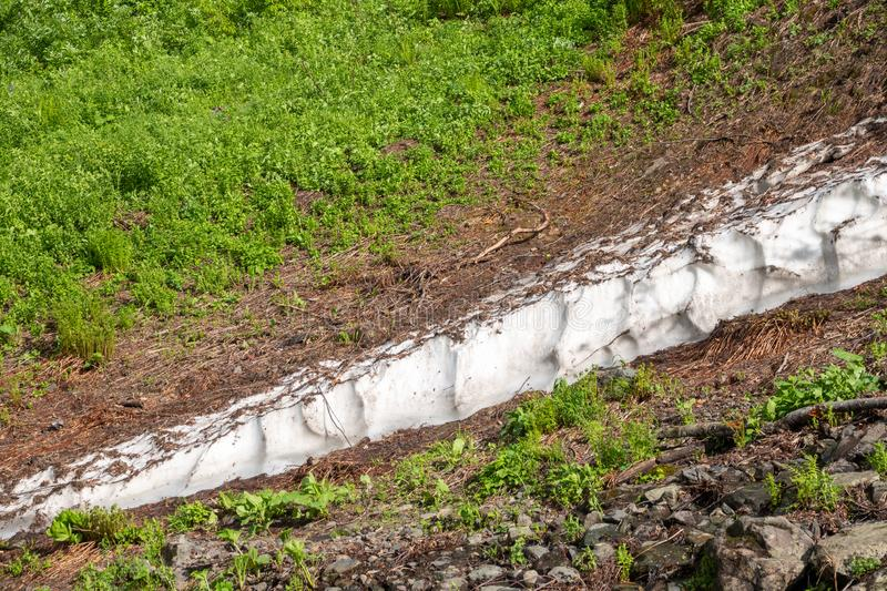 A thick layer of snow melting in high mountains. A thick layer of snow melting in the summer in high mountains. Green vegetation in the mountains in summer royalty free stock image
