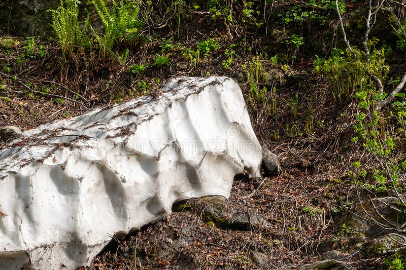 A thick layer of snow melting in high mountains. A thick layer of snow melting in the summer in high mountains. Green vegetation in the mountains in summer stock image