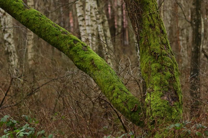 Thick moss on a tree. stock photo