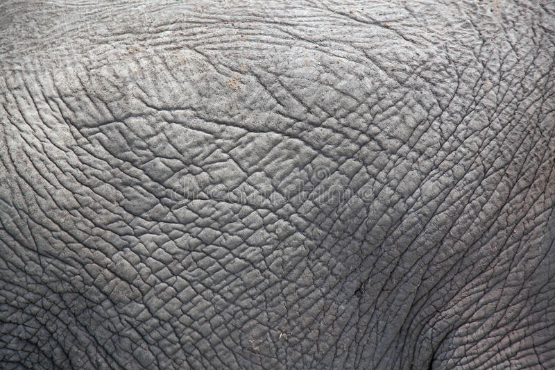Thick skinned grey elephant skin abstract stock photos