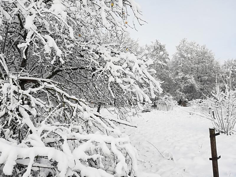 Thick snow on branches of bushes and trees stock photos